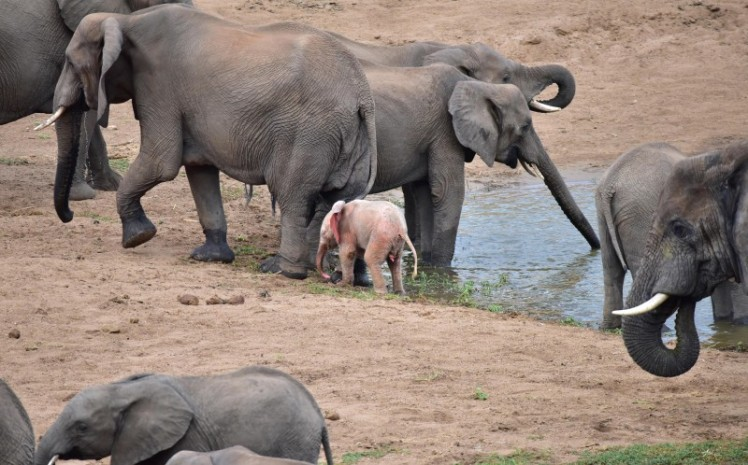 0_CATERS_PINK_ELEPHANT01-800x498