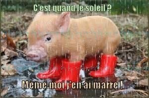 cochon bottes